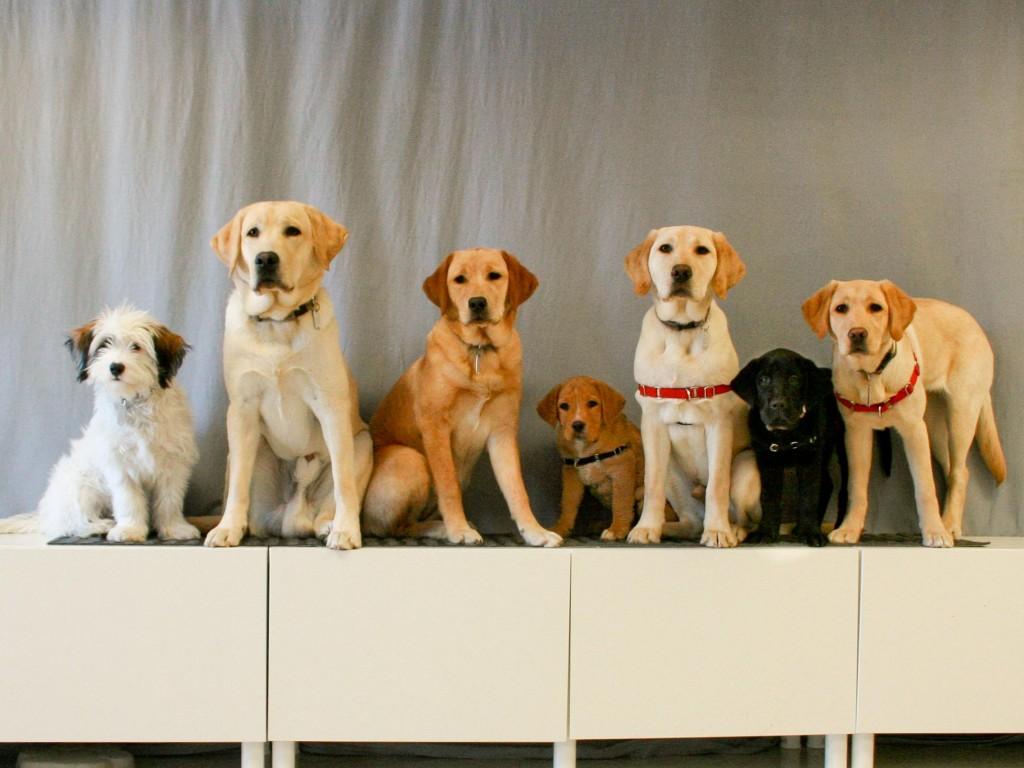 Dog Group 20150220-4627-3