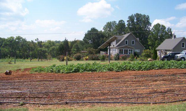 August Short List Winner – Best Place for Vegetarians