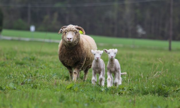 Rameses Welcomes Twin Sons