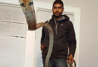 60 Animals Removed From Home of Man Bitten by King Cobra