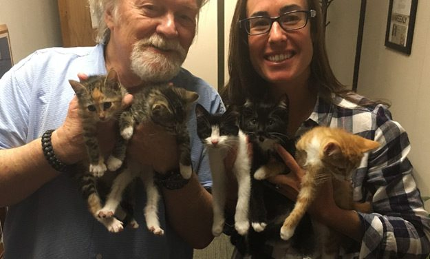 Meet a Whole Litter from Independent Animal Rescue