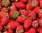 strawberries for summer