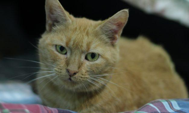Adopt-A-Pet: Rusty