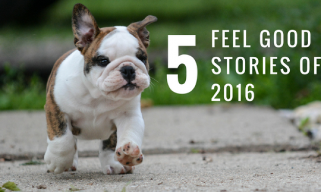 5 Feel Good Stories From 2016!
