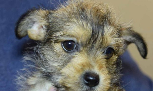 Puppy Stolen from Durham Animal Protection Society