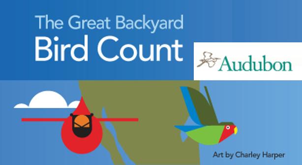 scientist in 15 minutes the great backyard bird count returns