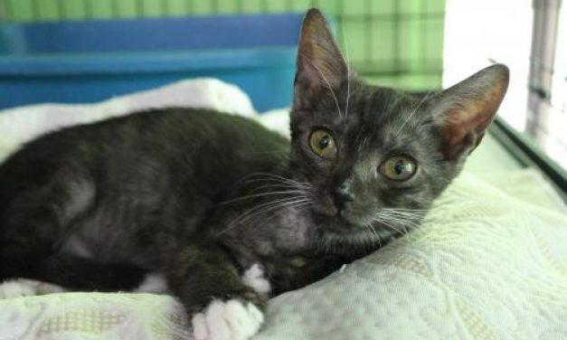 Adopt-A-Pet: Marina