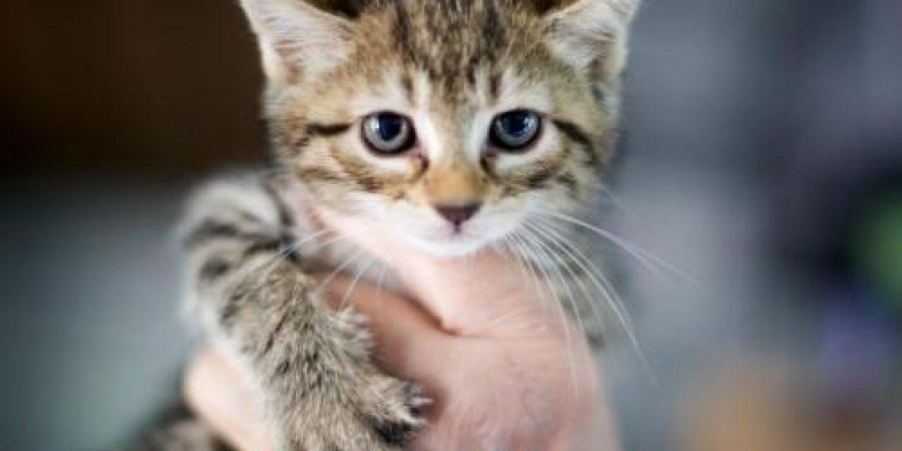 Adopt-a-Pet: Zippy