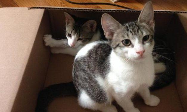 Adopt-A-Pet – McCoy
