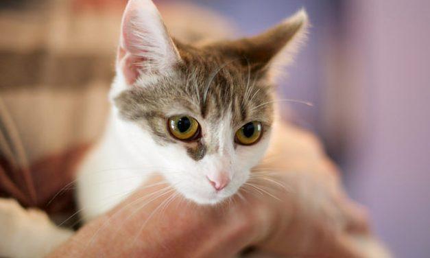 Adopt-A-Pet: Dainty